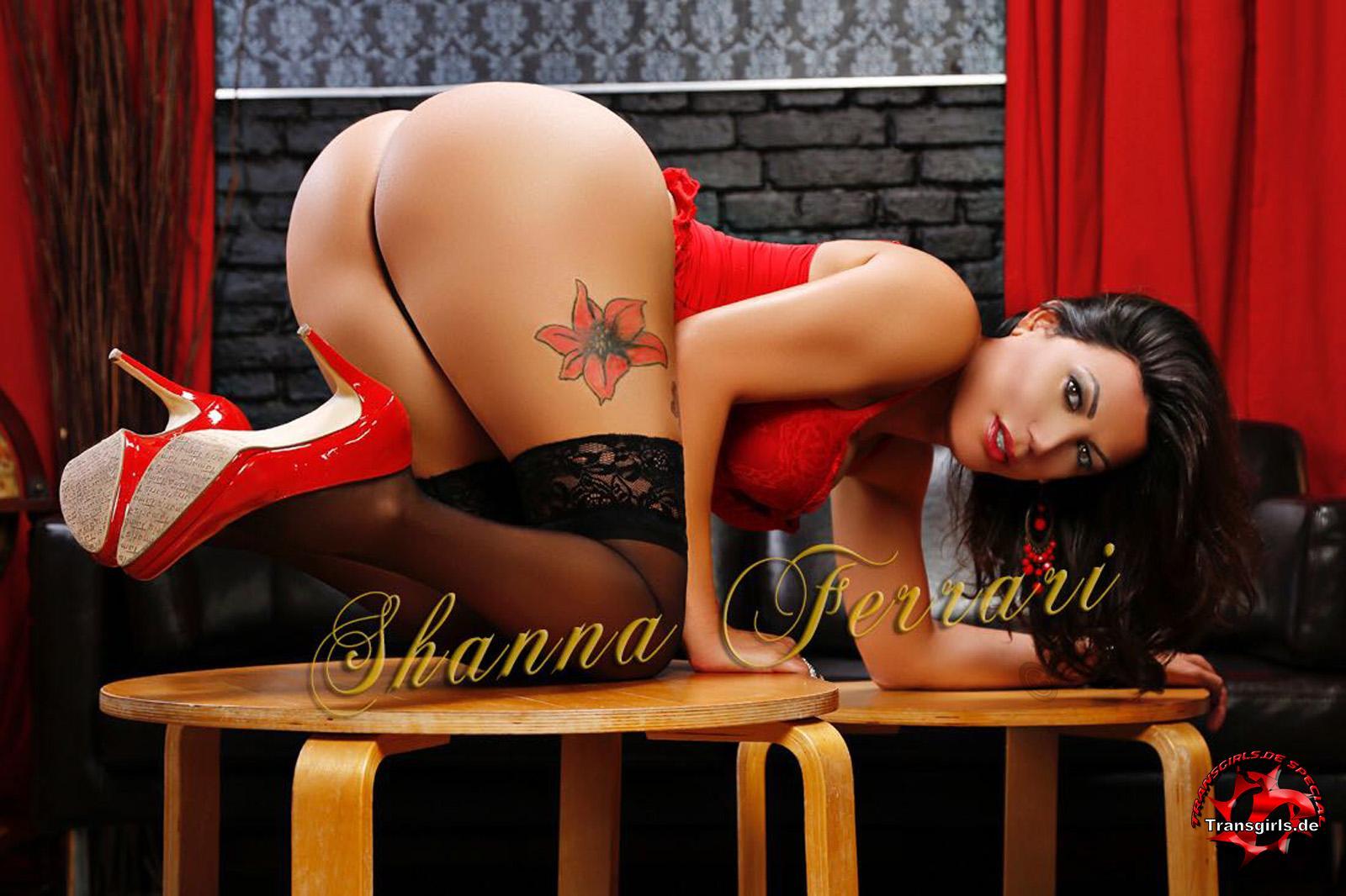 Foto Nr. 106966 von Shemale Trans Shanna Ferrari
