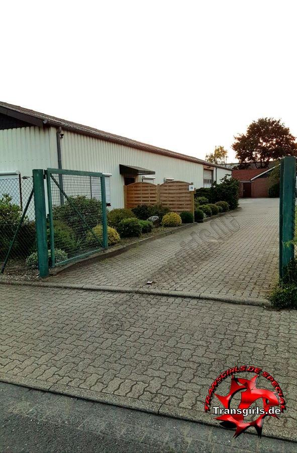 Foto Nr. 84430 von Shemale Trans Appartement Rendsburg